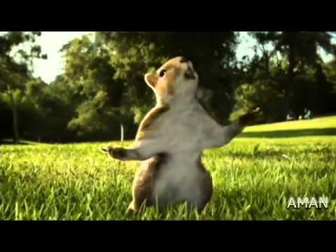 KIT KAT squirrel Ad 2010 (india) HD