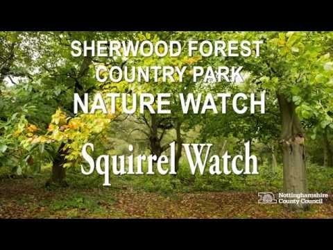 Sherwood Forest Nature Watch - Squirrel Watch