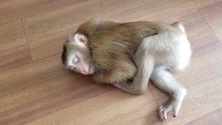 Monkey Baby Nui Nui is the sleeping princess