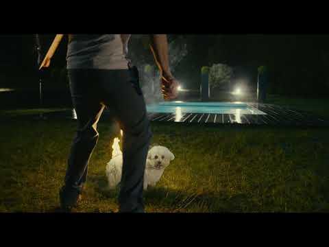 Dog scene from the Alibi.com (2017) movie