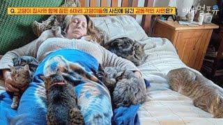 집사와 함께 잠든 6마리 고양이들이 담긴 이 사진에는 …