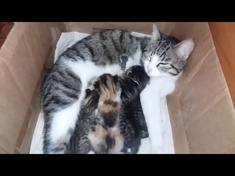 Anne Kedinin Çocuk Eğitimi :)