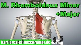 M. Rhomboideus Minor & Major Ansatz Ursprung Funktion Prüfungsstoff