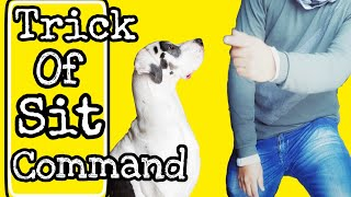 Dog SIT Training in Hindi - Saint Bernard Training