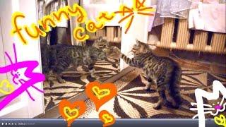 Кот увидел себя в зеркало !!! Котик жарит :)))