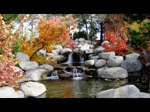 Relaxing Music-Purifying Mind and soul,Stress Relief music, Meditation Music, Study Music