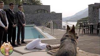 Ce chien est estimé à 90 millions de dollars… La raison va vous surprendre!