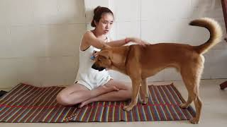A BEAUTIFUL GIRL AND HER FUNNY DOG IS BACK CAMBODIA