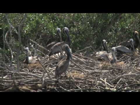Visit to Cat Island (47th Day of the BP Oil Spill)