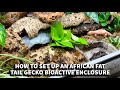 - How to set up an African Fat Tail Gecko BioActive Enclosure with The Dude
