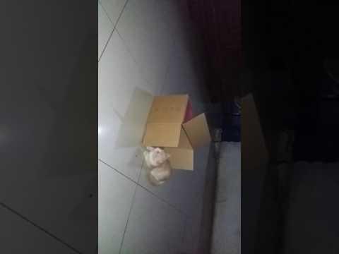 El gato loko jugando con el carton jjj