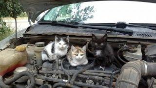 Коты под капотом