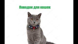 Поводок Для Кошек & Нужен Ли Кошке Поводок. Ветклиника Био-Вет