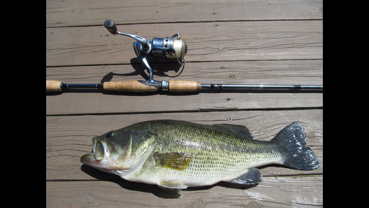 Gopro bedding bass fishing youtube for Bed fishing for bass