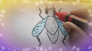House Fly Drawing Easy and Simple