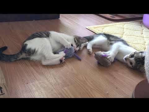 Mama Cat and Foster Kittens Love New Catnip Mice!
