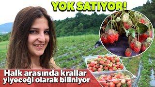 Osmanlı Çileği Kilosu 40 Lira'dan Yok Satıyor