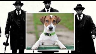 Итальянская мафия предлагает вознаграждение за голову этого пса! И вот почему