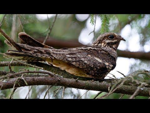 Вопрос: Какая крупна северная птица выходит на сушу лишь в период гнездования, .?