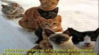 571 онлайн видео приколы +про животных