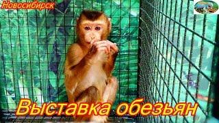 Выставка обезьян.Новосибирск.м