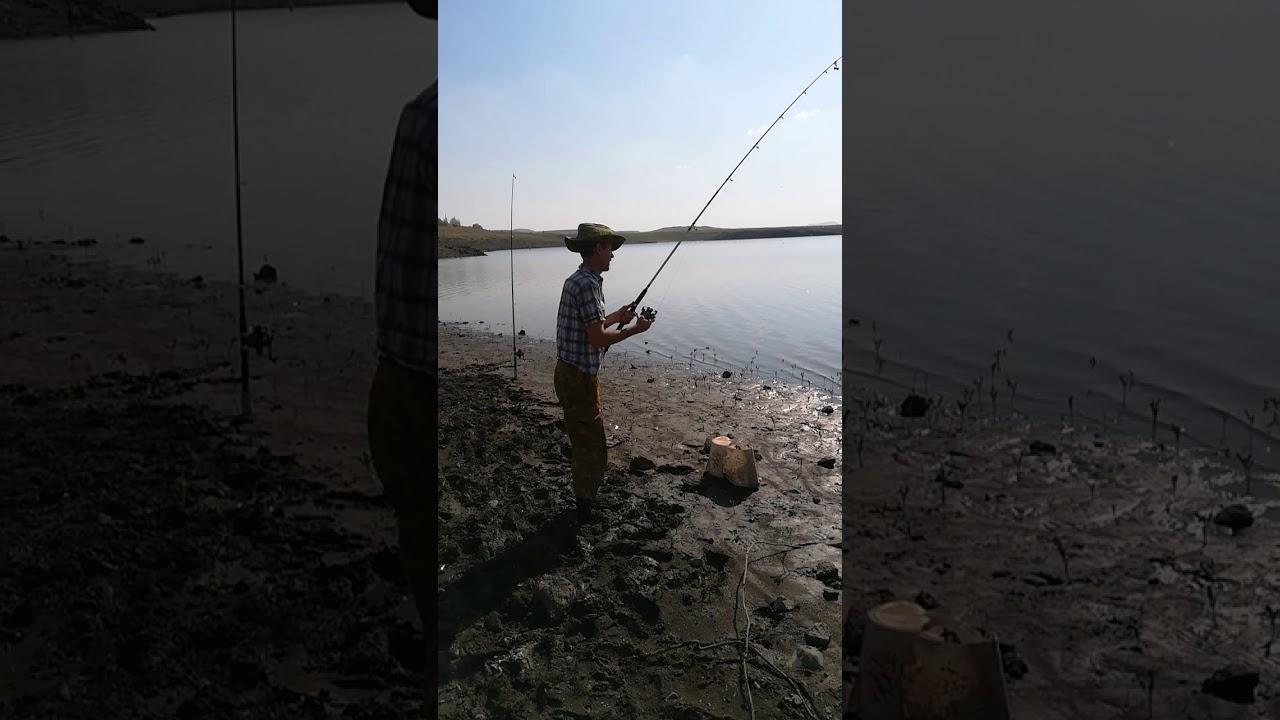 ловля сазана в дельте