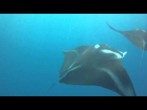 Flipper Snorkeling with Manta Rays & Dolphins