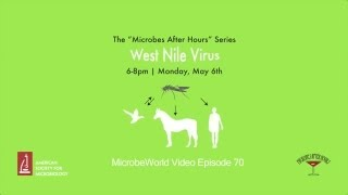 MWV Episode 70 - Microbes After Hours - West Nile Virus