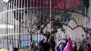 Sangkar Burung Raksasa ( Giant Bird Cage ) di Museum Satwa Jawa Timur Park 2 Malang