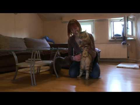 Katzen mit Freude bürsten