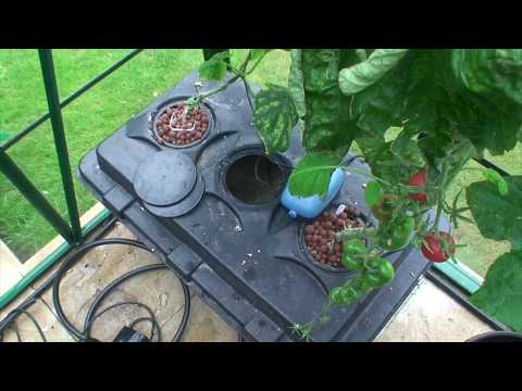 Greenhouse/Hydroponic Nutrients Update June 29th