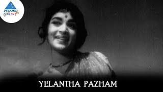 Yelantha Pazham Video Song | Panama Pasama Songs | Gemini Ganesan | Saroja Devi |Pyramid Glitz Music