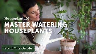 Houseplant 101: How to Water Houseplants Properly — Ep 120