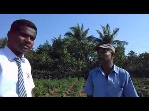 Parthenium - A Scientific Video Clip