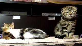 Смешные котята 22, подборка - 2013-2014