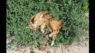 How to Make Homęmade Cat Repellent ??