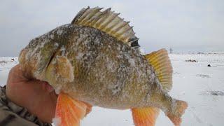 Рыбалка в Сибири на озере Сартлан зимой ПОДВОДНАЯ СЪЁМКА