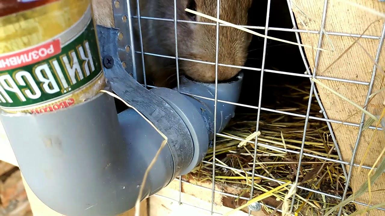 автопоилка для кроликов своими руками фото ламинат или паркет