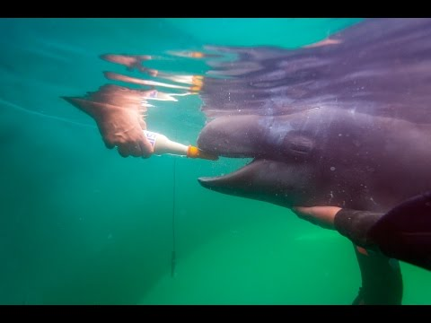Update on Rescued False Killer Whale Calf