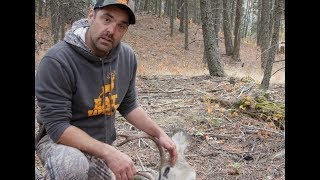 EatWild - How to skin out a deer head