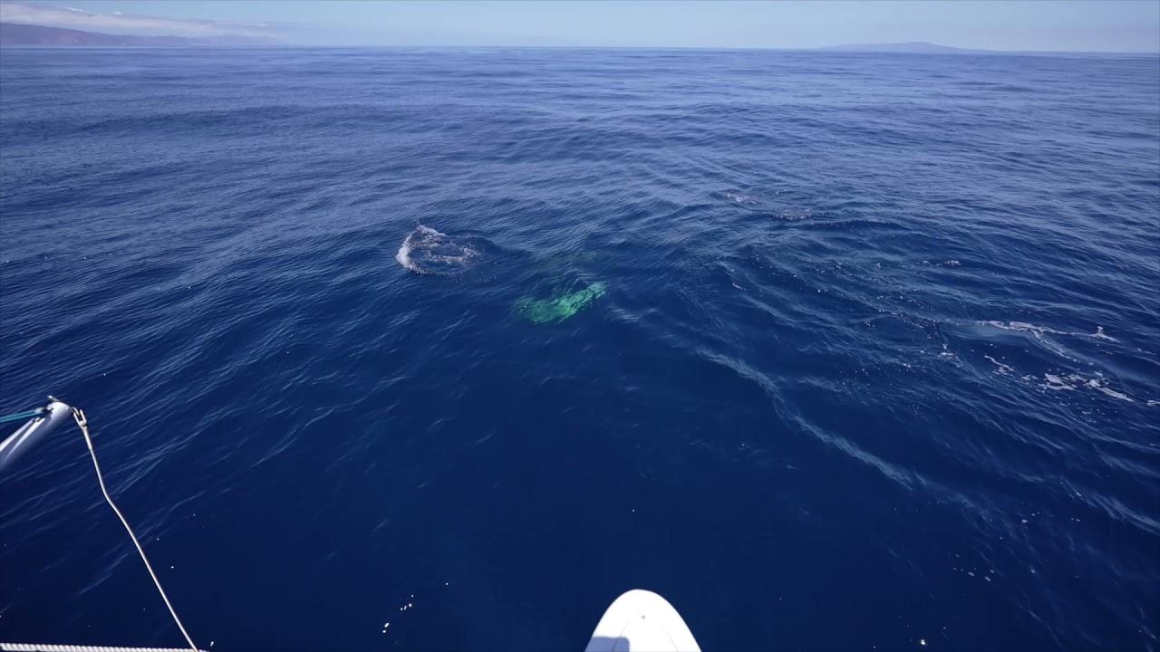 Sailing Catalina - Sneak Peek - Outside Beyond the Lens