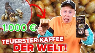 ich TRINKE KATZENKACKE !!! (KEIN CLICKBAIT) 😱 TEUERSTER KAFFEE DER WELT II RayFox