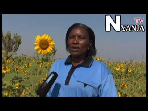 Christine Nyanja - Phone, Address, Background info ...
