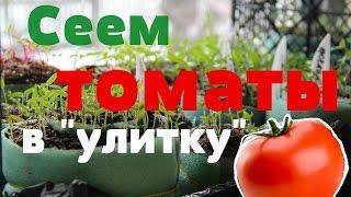 Сеем томаты в