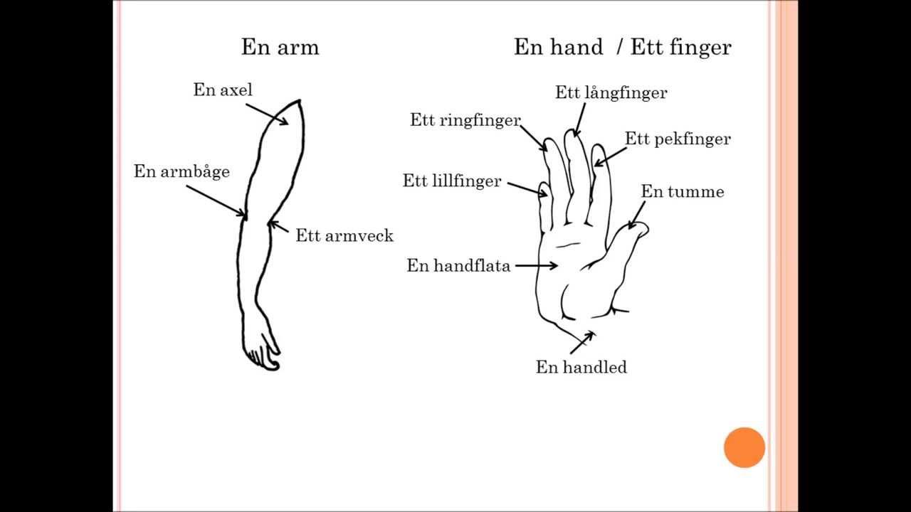 människokroppen yttre delar