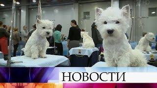 ВМоскве наинтернациональной выставке собак зазвания чемпионов борются 15 тысяч участников.