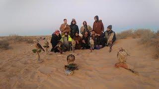 الصيد بالصقور صيد الكروان والأرانب مع رحلة صيد رائعه/Wild falcon hunting