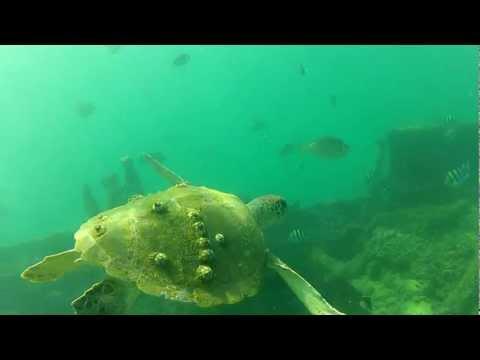 Moreton Island treasures: snorkelling the Tangalooma Wrecks