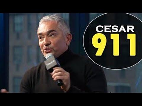 CESAR MILLAN about CESAR 911 episodes on Nat Geo WILD | Interview February 04, 2016