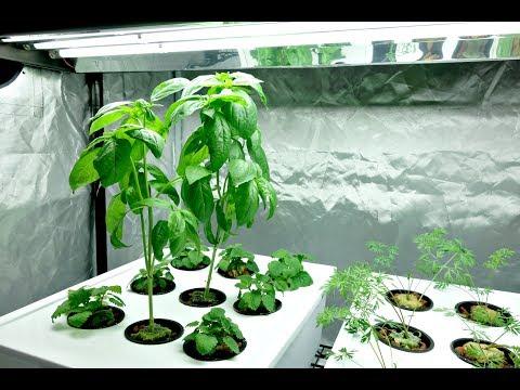 Indoor Farming Update 2-18-18 / ILove Sundays.